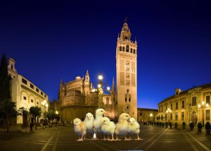 chicks and giralda