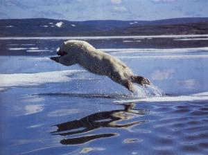 jumping bear
